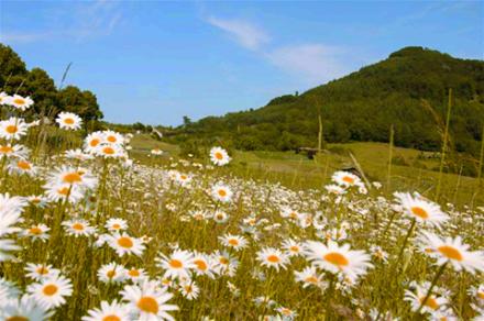 Vakantiehuisje Winterberg - Het land van de 1000 bergen!